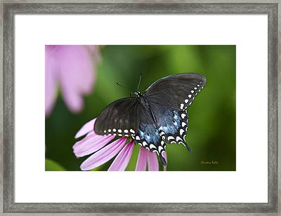Spice Of Life Butterfly Framed Print by Christina Rollo