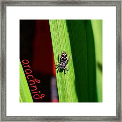 Spider On Green Leaf Framed Print by Toppart Sweden
