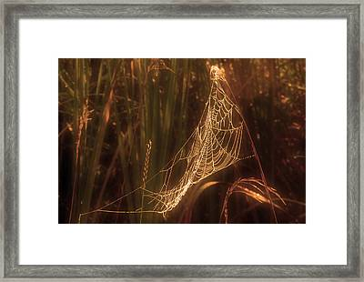 Spider Web A Framed Print by Jim Vance