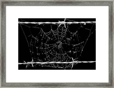 Spider Web On Barbed Wire Framed Print by Toppart Sweden