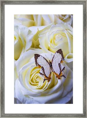 Spider Web Pattern Butterfly Framed Print by Garry Gay