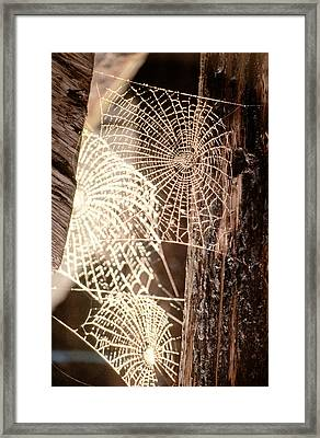 Spider Webs Framed Print by Anonymous