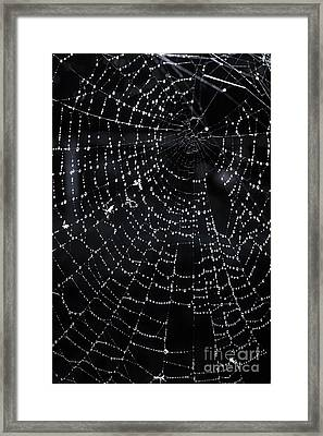 Spiderweb Framed Print by Elena Elisseeva