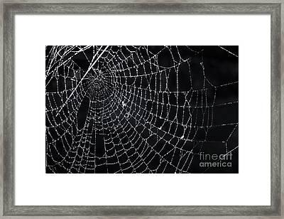 Spiderweb With Dew Framed Print by Elena Elisseeva