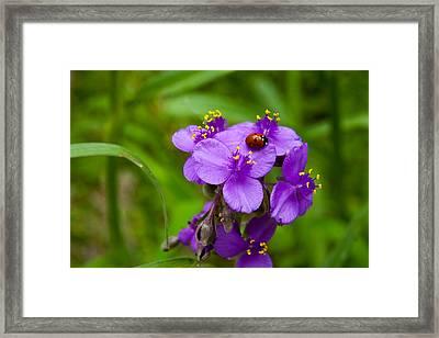 Spiderwort And Friend Framed Print by Mark Weaver