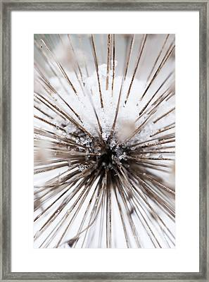 Spikes And Ice Framed Print by Anne Gilbert