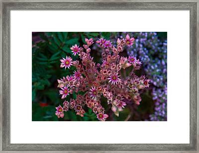 Spiky Flowers Framed Print by Omaste Witkowski