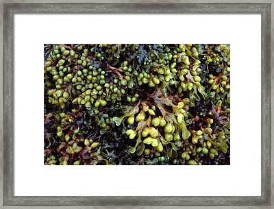 Spiral Or Twisted Wrack Framed Print by Nigel Downer