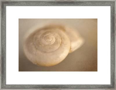Spiral Shell 2 Framed Print by Scott Norris
