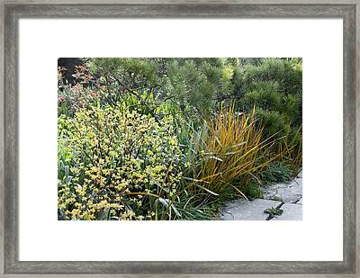 Spirea Sp. And Libertia Peregrinans Framed Print by Science Photo Library