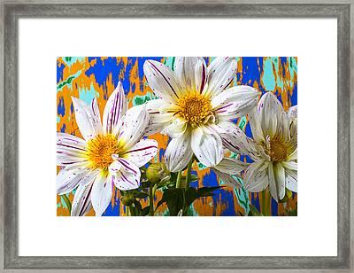 Splash Of Color Framed Print by Garry Gay