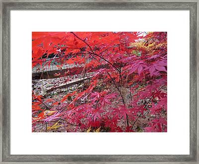 Splendid Fall Framed Print by Valia Bradshaw