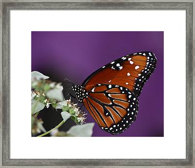Spotted Beauty Framed Print by Mary Zeman