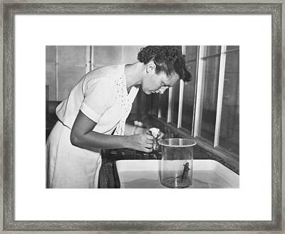 Spotted Fever Mouse Research Framed Print by Underwood Archives
