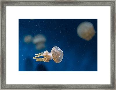 Spotted Jelly Aliens 2 Framed Print by Scott Campbell
