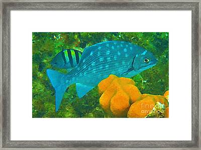 Spotted Surgeon Fish Framed Print by John Malone