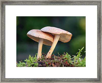 Spotted Toughshank Framed Print by Nigel Downer