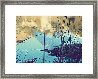 Spread Those Wings And Fly Framed Print by Laurie Search