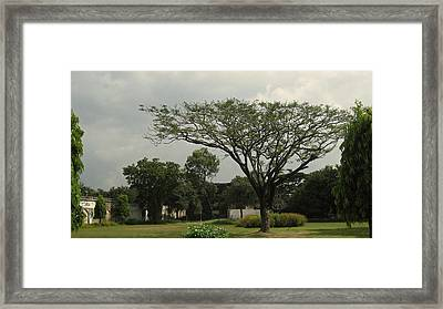 Spreading Tree Framed Print by Russell Smidt