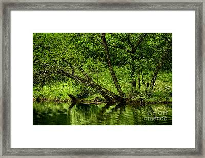 Spring Along West Fork River Framed Print by Thomas R Fletcher