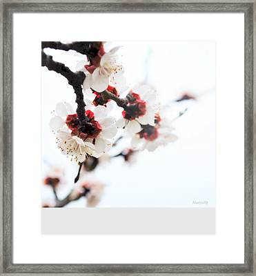 Haiku Framed Print by Marija Djedovic