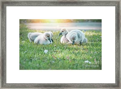 Spring Babies Framed Print by Kym Clarke