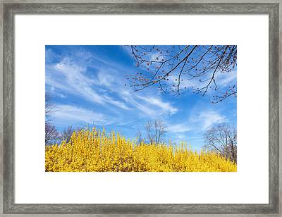 Spring Framed Print by Bill Wakeley