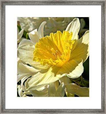 Spring Bloomers Framed Print by Chris Berry