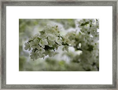 Spring Bloosom Framed Print by Sebastian Musial