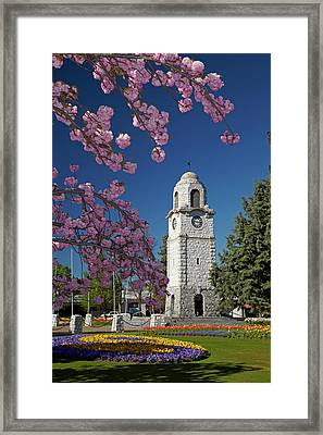 Spring Blossom And Memorial Clock Framed Print by David Wall