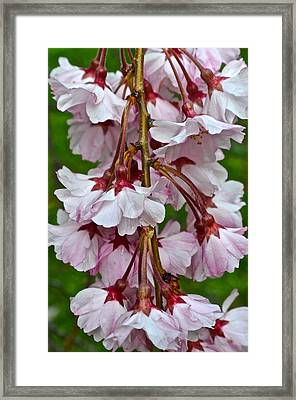 Spring Blossom Framed Print by Frozen in Time Fine Art Photography