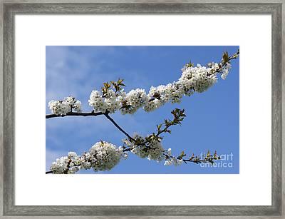 Spring Blossoms 6 Framed Print by Carol Lynch