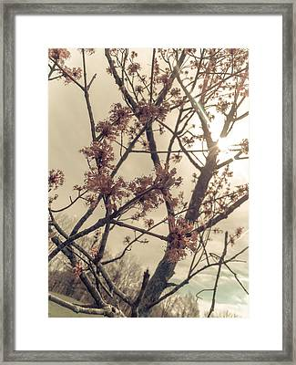 Spring Blossoms Framed Print by Dawdy Imagery
