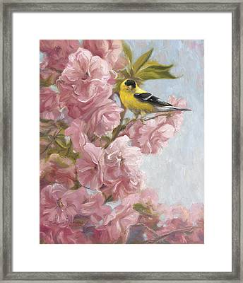 Spring Blossoms Framed Print by Lucie Bilodeau