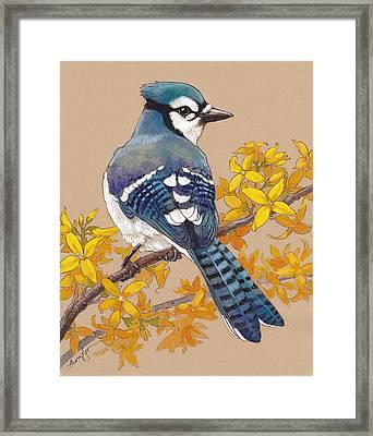 Spring Blue Jay 3 Framed Print by Tracie Thompson