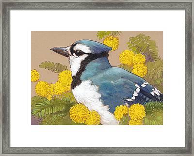 Spring Blue Jay 4 Framed Print by Tracie Thompson