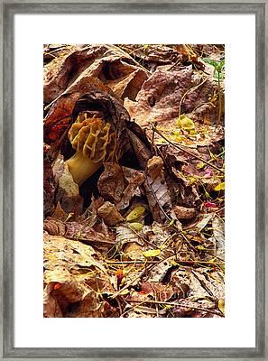 Spring Bounty Morel Mushroom Framed Print by Thomas R Fletcher