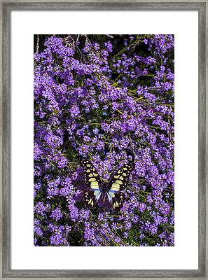 Spring Butterfly Framed Print by Garry Gay