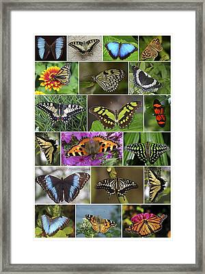 Spring Butterfly Panel Framed Print by Daniel Hagerman