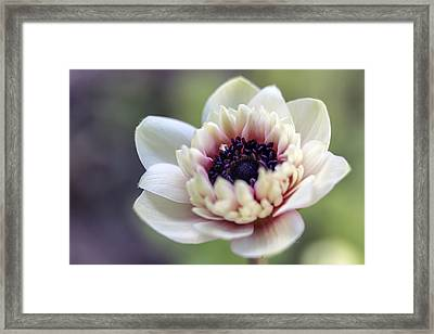 Spring Center Framed Print by Caitlyn  Grasso