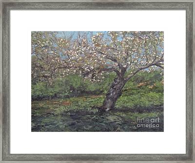 Spring Cherry Blossoms Framed Print by Gregory Arnett