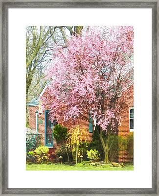 Spring - Cherry Tree By Brick House Framed Print by Susan Savad