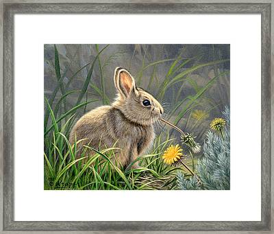Spring Cottontail Framed Print by Paul Krapf