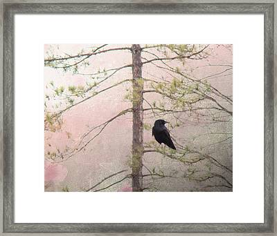 Spring Crow  Framed Print by Gothicolors Donna Snyder