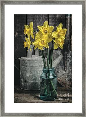 Spring Daffodil Flowers Framed Print by Edward Fielding