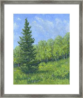 Spring Evergreen Framed Print by David King