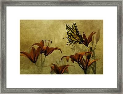 Spring Fever Framed Print by Diane Schuster