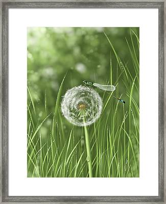 Spring Flowering Framed Print by Veronica Minozzi