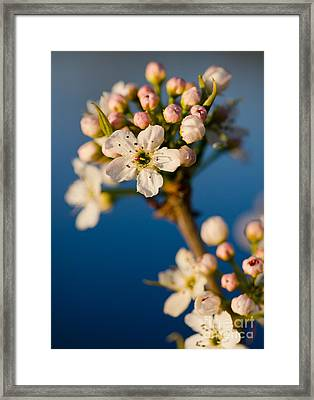 Spring Forth Framed Print by Nick  Boren