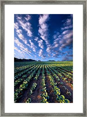 Spring Fresh Framed Print by Phil Koch